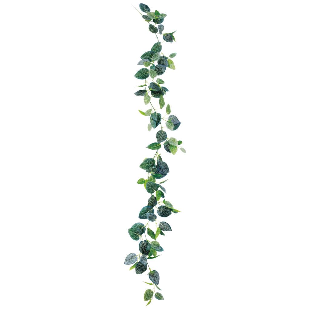ガーランドグリーン・ペペロミアミックス -VN-02
