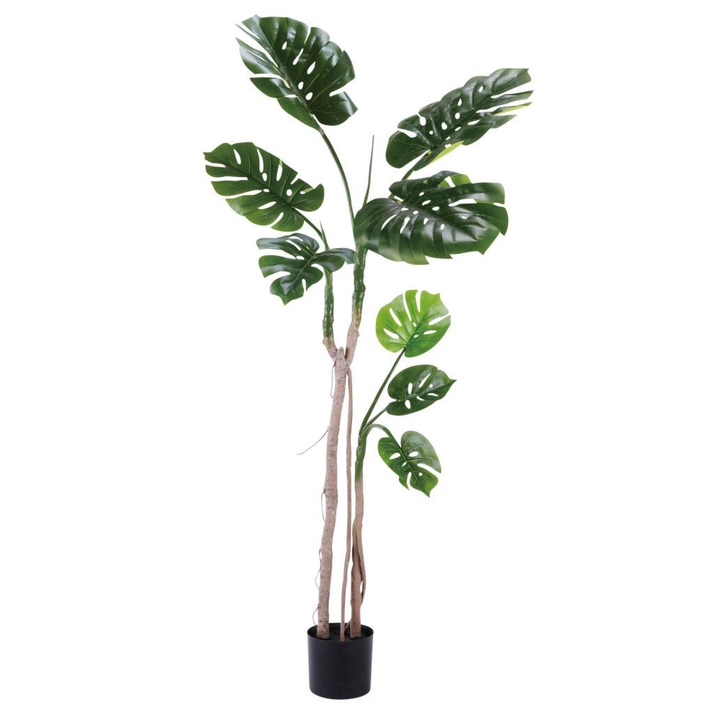 観葉植物・モンステラ(小)-WD-04