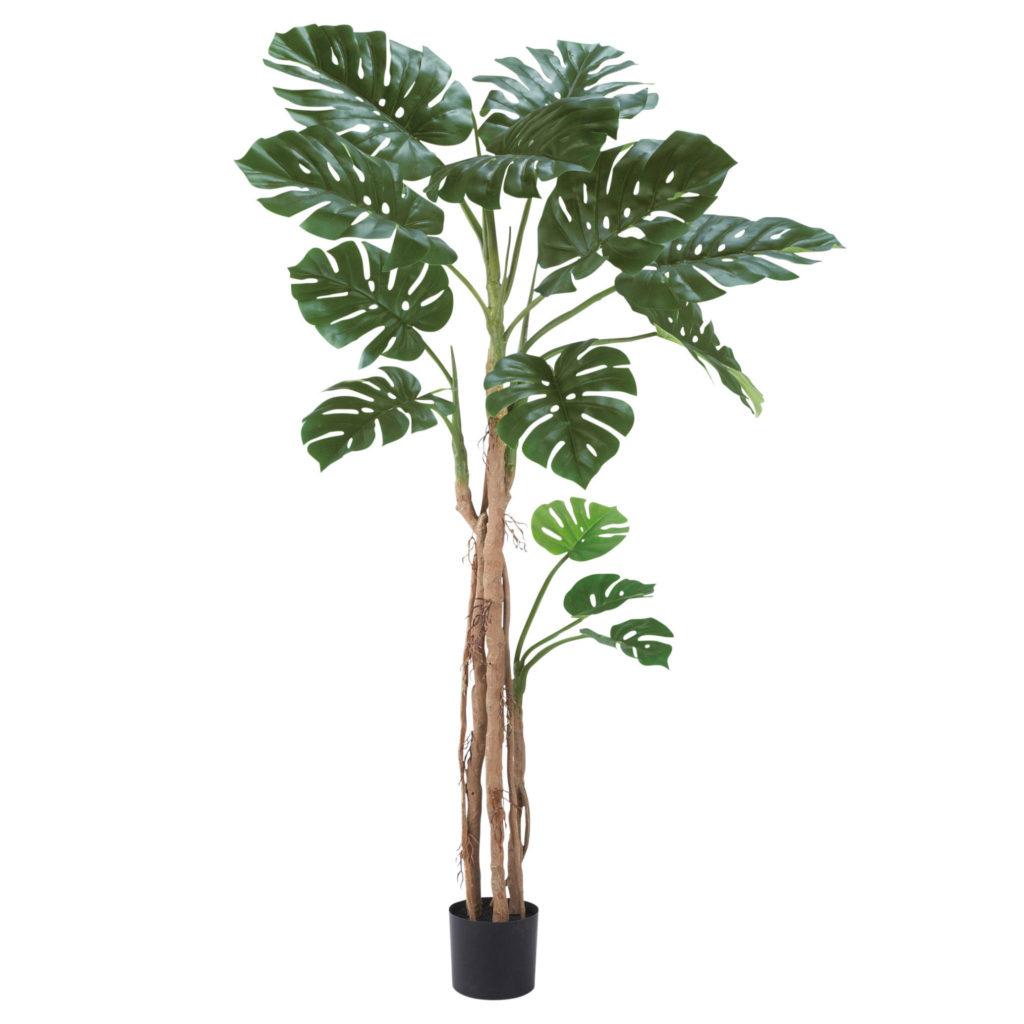 観葉植物・モンステラ(大)-WD-05