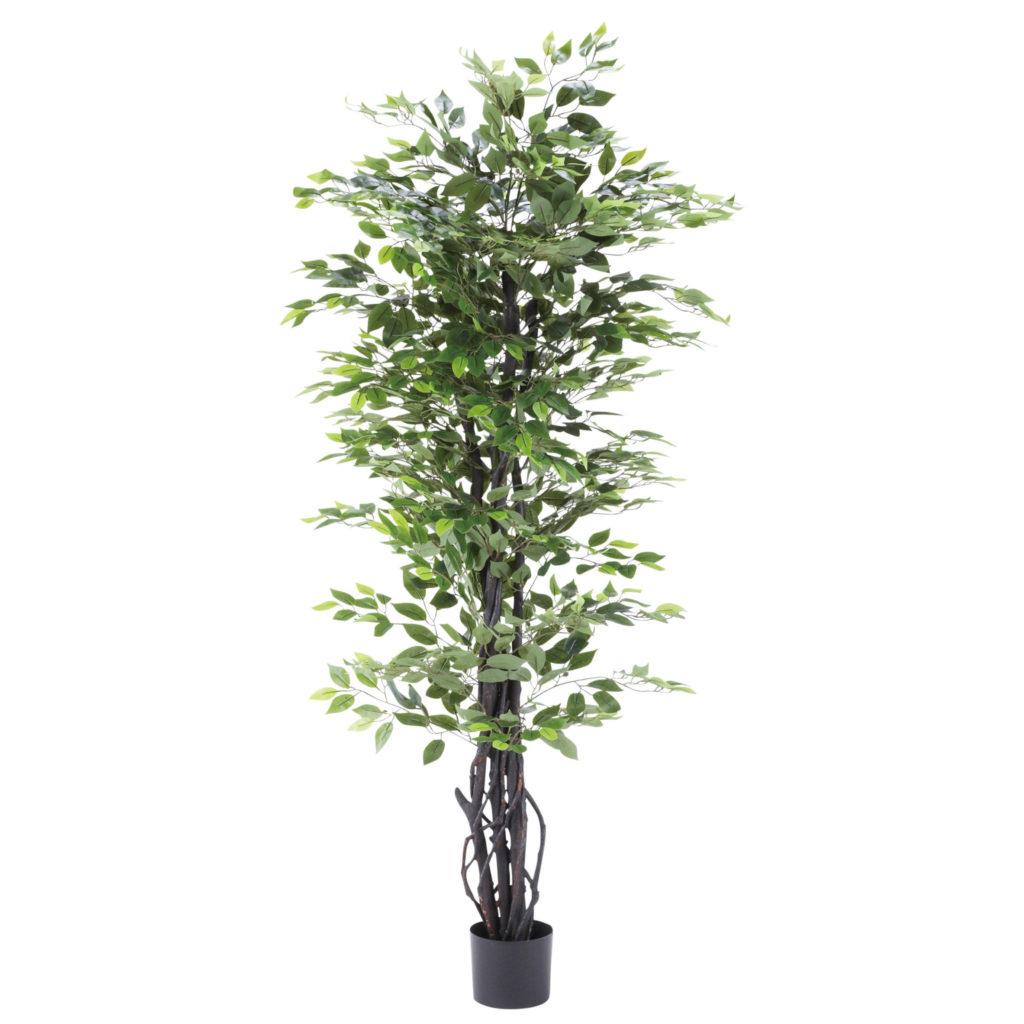 観葉植物・ベンジャミン-WD-09