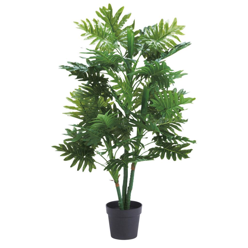 観葉植物・セローム-WD-11