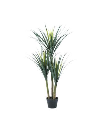 観葉植物ドラセナ・WD-13