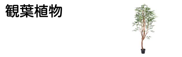 観葉植物サイド