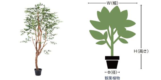 観葉植物のサイズ